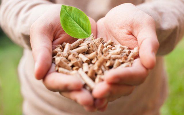 a-energia-da-biomassa-florestal