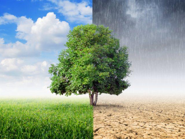 Mudanças climáticas: como evitar