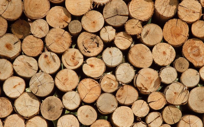 Resultado de imagem para madeira e celulose