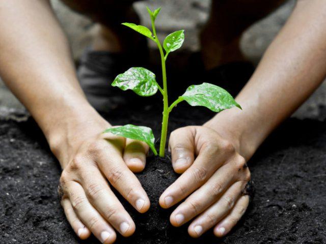 O que é silvicultura?