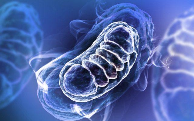 as-diferencas-entre-respiração-aerobia-e-anaerobia