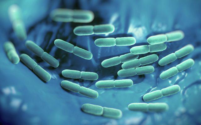 as-enzimas-podem-vir-de-organismos-geneticamente-modificados-OGM