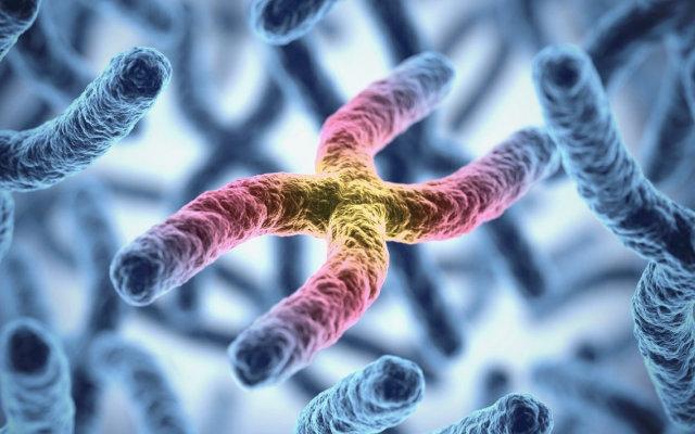 o-que-sao-os-cromossomos