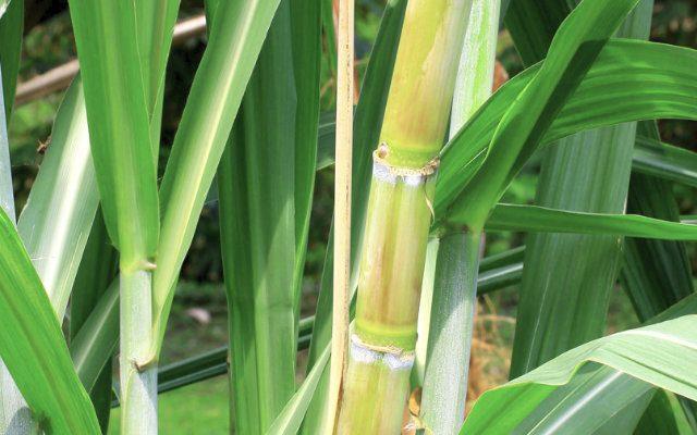 Como aumentar a produção de etanol com a capacidade existente