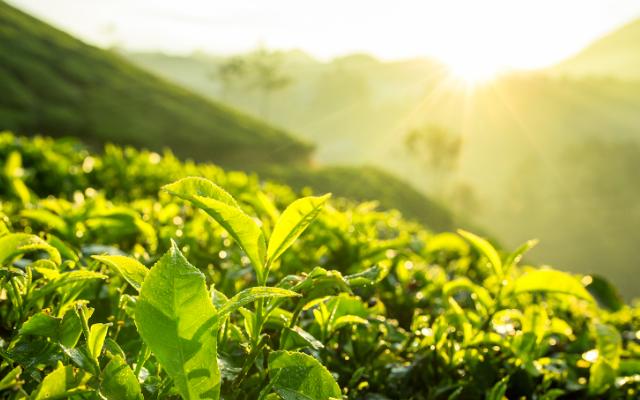 Resultado de imagem para agricultura sustentável