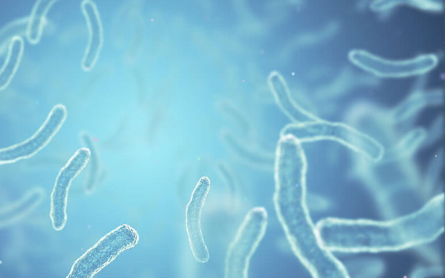 O que são microrganismos?