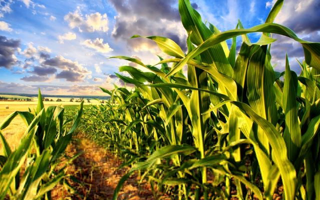 BioAg-sustentabilidade-aumento-na-producao-agricola