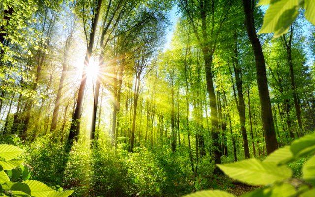 A preservação das florestas e a sustentabilidade