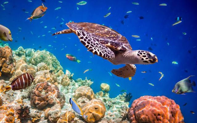 ODS 14-proteger-a-vida-marinha