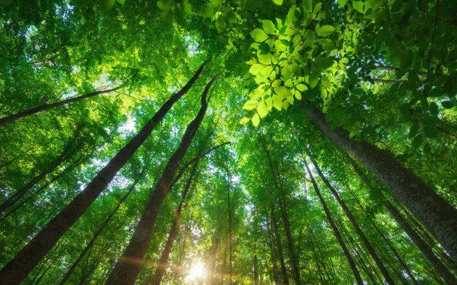 A importância da preservação do meio ambiente