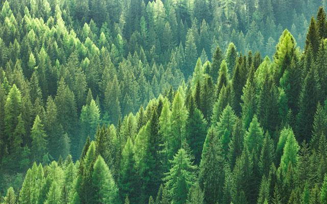 o-que-sao-ecosistemas