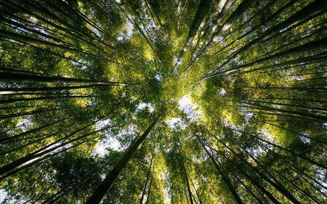 Quais são os efeitos nocivos do fosfato para o meio ambiente?