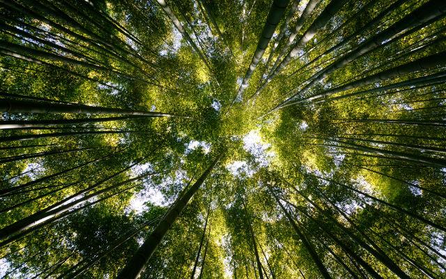quais-sao-os-efeitos-nocivos-do-fosfato-para-o-meio-ambiente-1-