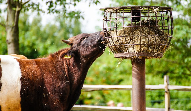 Enzimas na produção de aditivos à base leveduras para alimentação animal