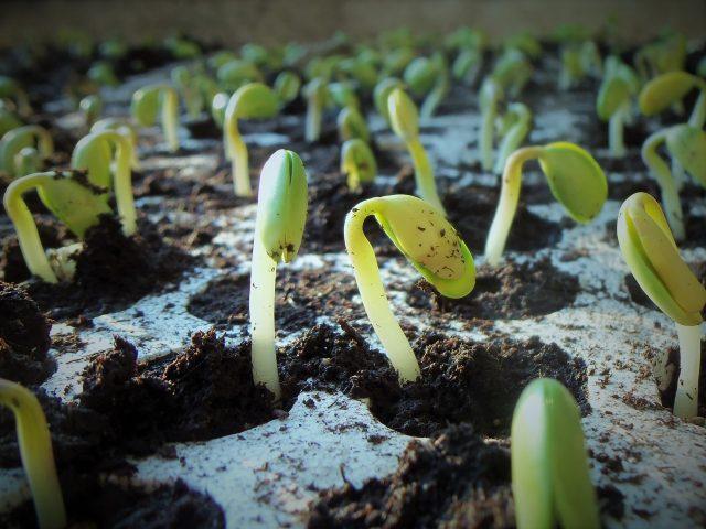Novozymes apresenta novo estudo sobre produtividade e sustentabilidade