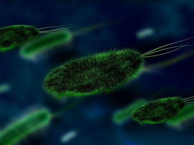 bactéria