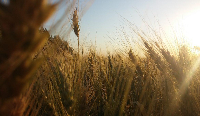 O agronegócio e a sustentabilidade