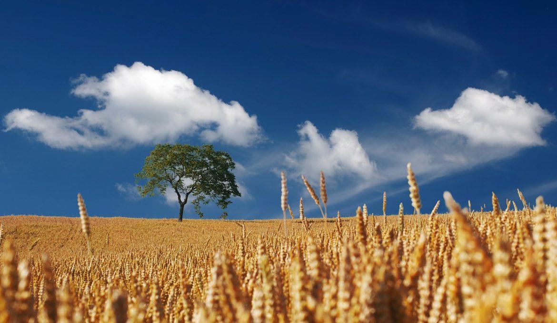 sustentabilidade - agro