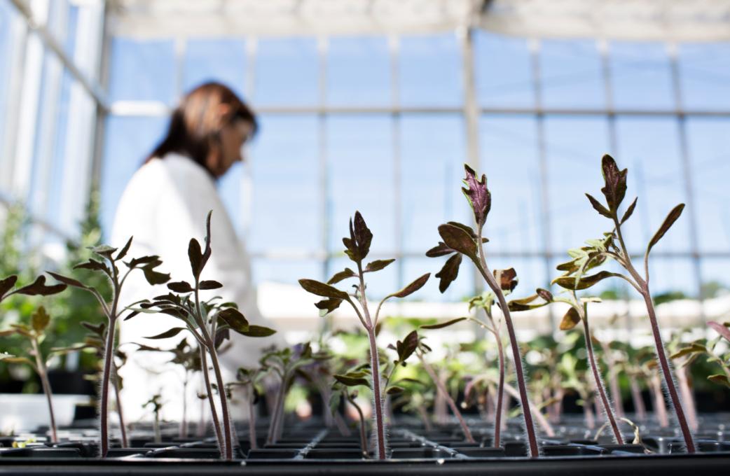 Pesquisadores brasileiros descobrem grupo de bactérias que podem ajudar as plantas em situações de seca