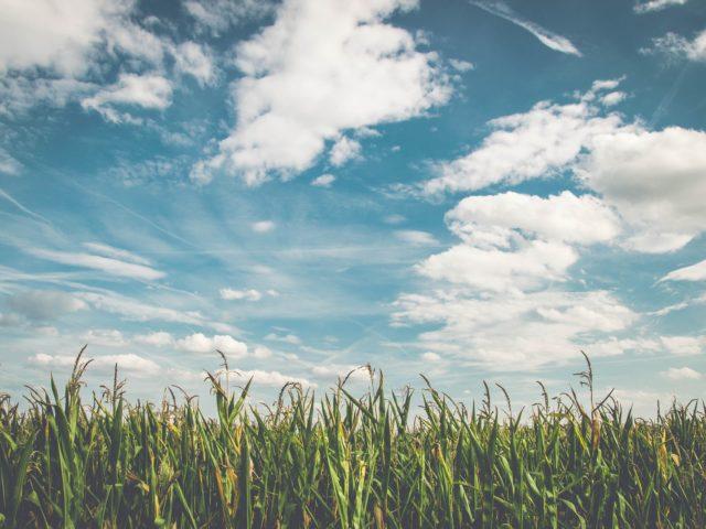 A experiência brasileira na produção do etanol