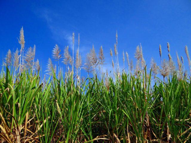 A experiência brasileira na produção de etanol é destacada no EUA