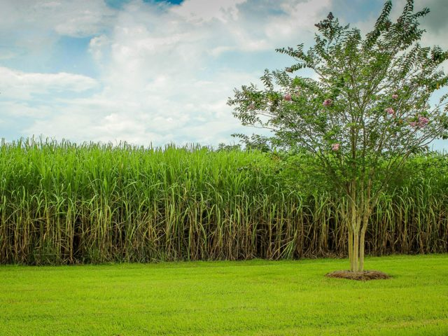 Publicação norte-americana destaca a experiência brasileira na produção do etanol