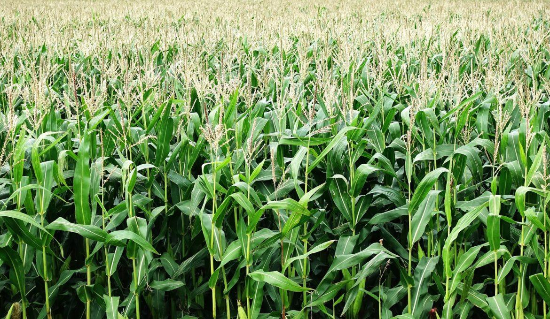 Brasil se prepara para ser um dos principais produtores de etanol celulósico