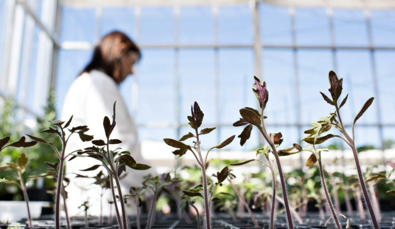 Plantas - Melhoramento genético