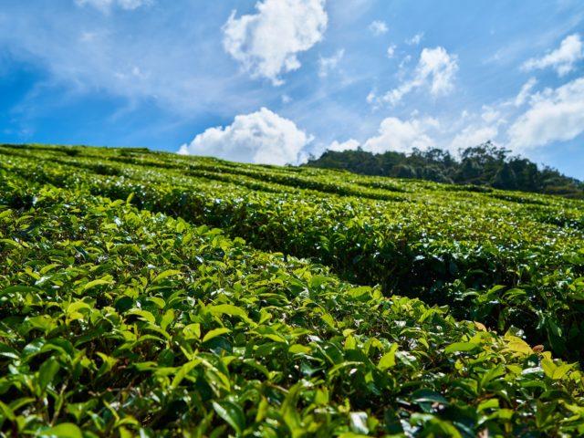 Quase 30% das terras do planeta são utilizadas para pastagens e plantio de alimentos segundo a FAO