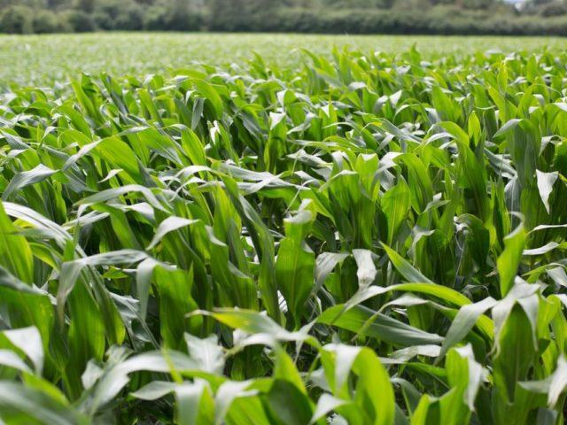 Fontes alternativas para a produção de Etanol