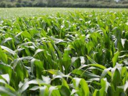 Produção de etanol - Fontes alternativas