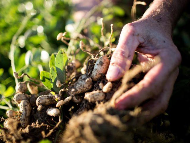 O que é Simbiose? Qual é o seu potencial dentro da Agricultura?