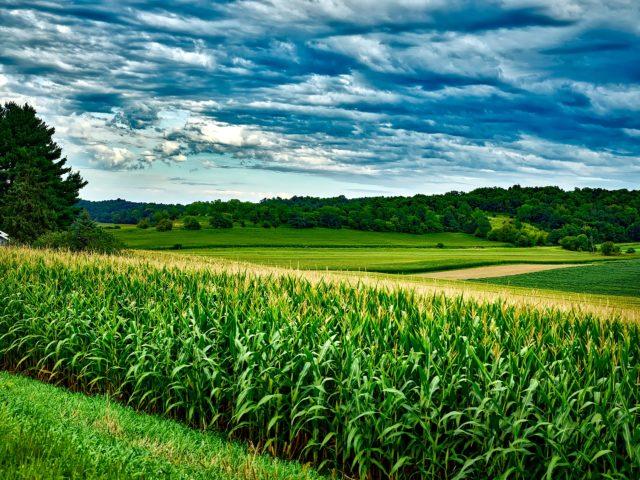 Pesquisa da Agroicone destaca a produção de etanol de milho no Centro-Oeste