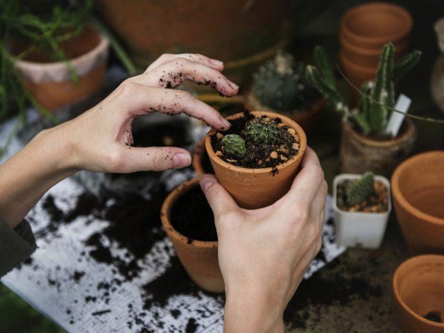 Compostagem é uma alternativa para o uso adequado do lixo orgânico e ajudar a diminuir as mudanças climáticas