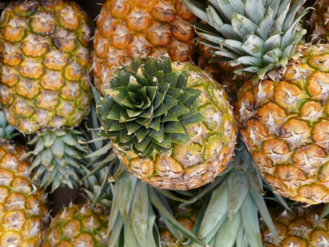 Pesquisadores brasileiros desenvolvem curativo a partir do abacaxi