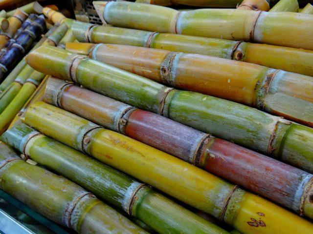 Pesquisadoras criam cola atóxica a partir da cana-de-açúcar