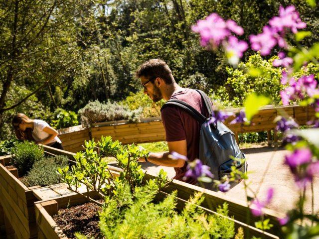 Como a compostagem pode ajudar cada um a fazer sua parte em busca de um mundo melhor