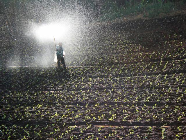 Política Nacional de redução de agrotóxicos está sendo discutida pelo país