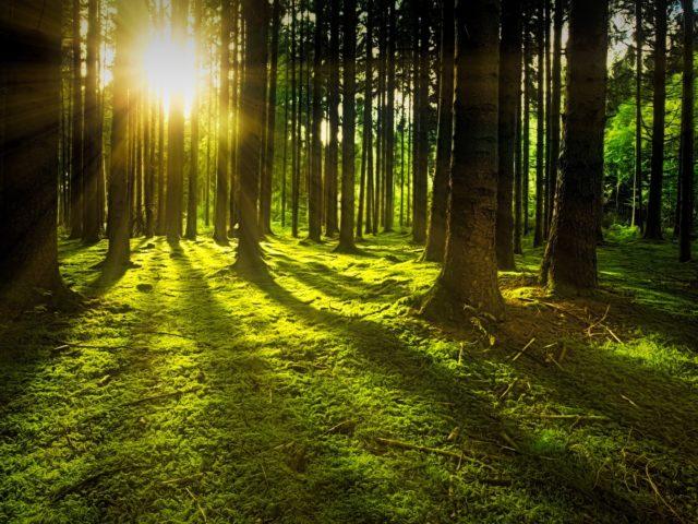 Cultivo de florestas para fins industriais diminui pressão sobre matas nativas