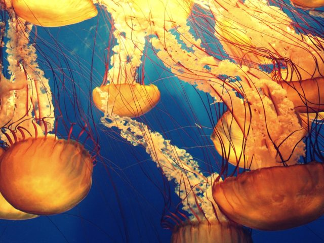 Mudanças climáticas aumentam o número de espécies venenosas nos mares