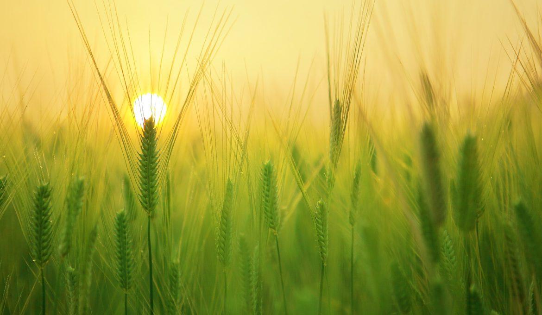 CNA quer mostrar na 24ª COP como o setor agropecuário contribui para o Brasil cumprir metas climáticas