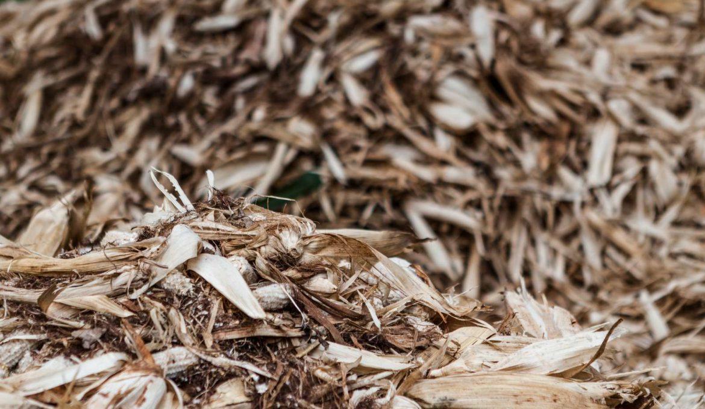 biomassa chorume