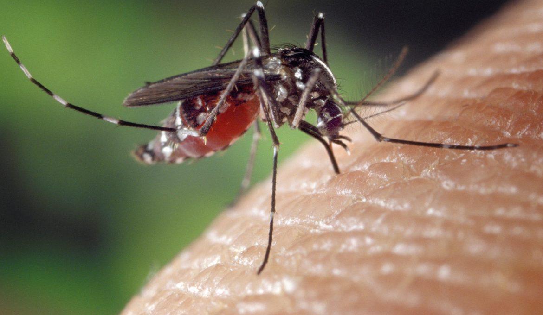 Dias mais quentes requerem cuidados no combate à Dengue