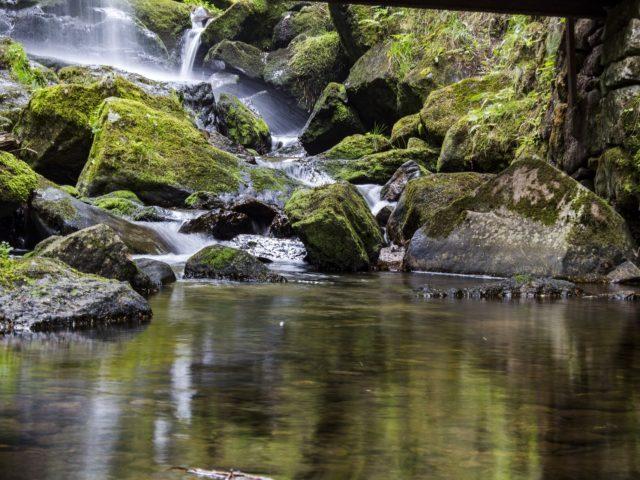 Áreas de proteção ambiental chegam a 15% da superfície terrestre
