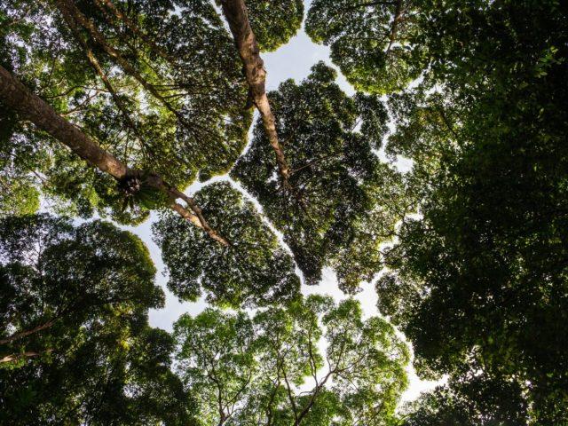O que é Biomimética?