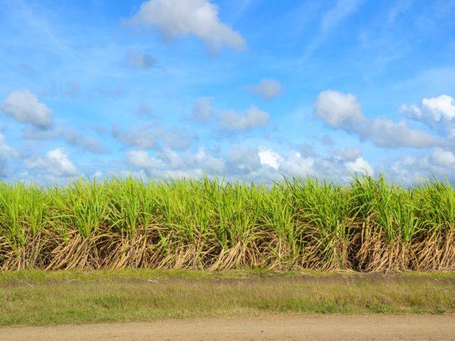 Segunda edição do workshop sobre Soluções Enzimáticas para Cana-de-Açúcar