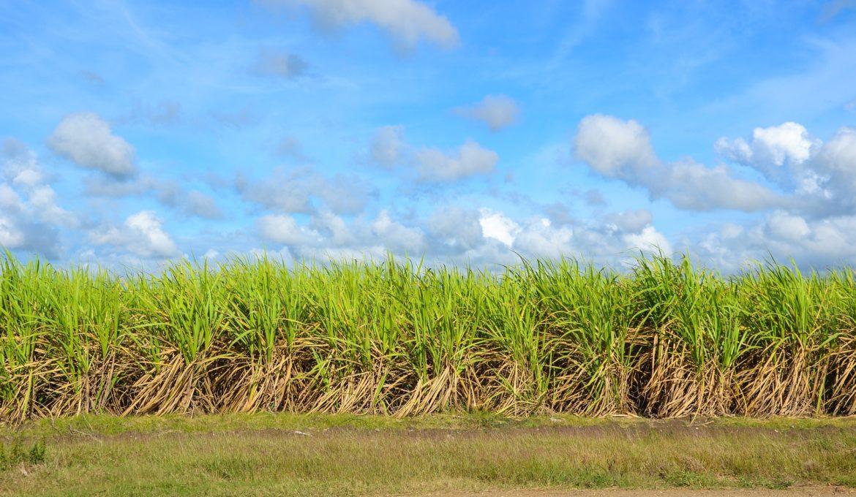Novo estudo avalia o potencial de expansão da produção de bioenergia da cana na América Latina e na África
