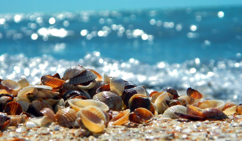 Vai para a praia? Não pegue conchas! Elas são fundamentais para o meio ambiente