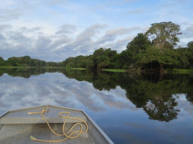 Projeto de Lei no Senado quer criar o Programa Mais Ciência Amazônia