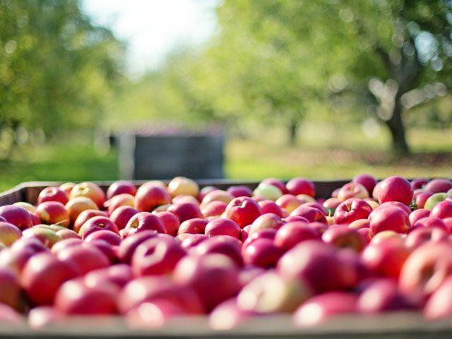 O desaparecimento da biodiversidade ameaça produção de alimentos, alerta FAO
